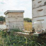 Honey Bees at Yoders' Farm